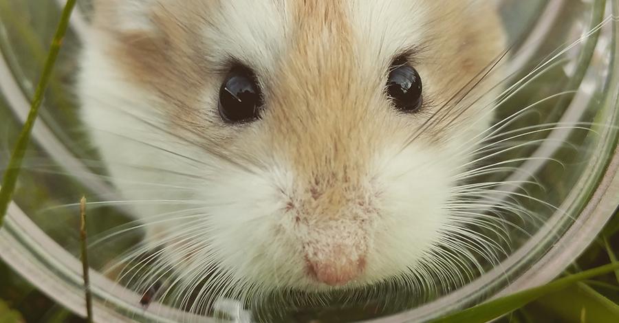 3 spôsoby, ktoré pomôžu udržať myši mimo domácnosť